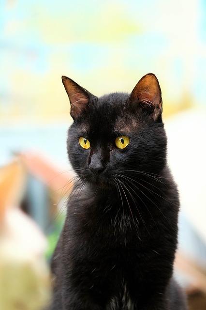 fotografie černých koček ebenová kapuce porno trubice